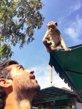 Lop buri singe - délicieuse vie