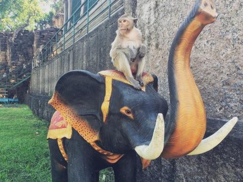 Lop Buri ville des singes - délicieuse vie