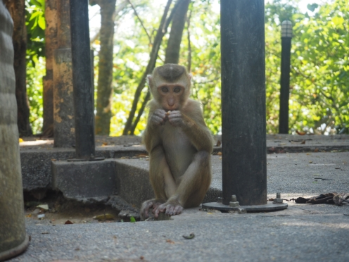monkey hill - phuket - delicieuse vie
