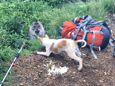 Dogs Rinjani Trek day2 - Delicieuse Vie