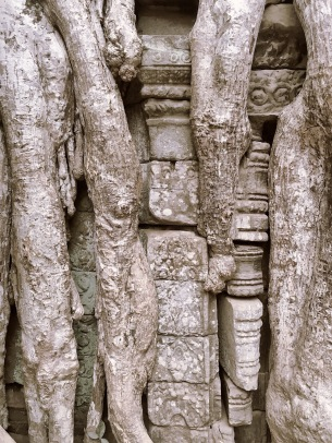 Detail arbre temple - Angkor Cambodia - Delicieuse Vie
