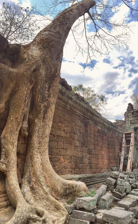 Temple Ta Prohm - panorama arbre - Angkor Cambodia - Delicieuse Vie