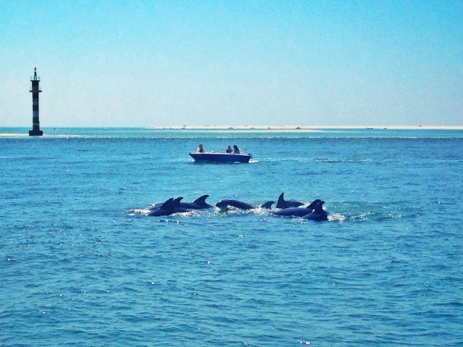 Dolphins at Troia, Portugal - Delicieuse Vie
