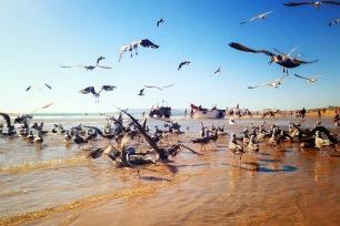 Praia da Caparica - Delicieuse Vie