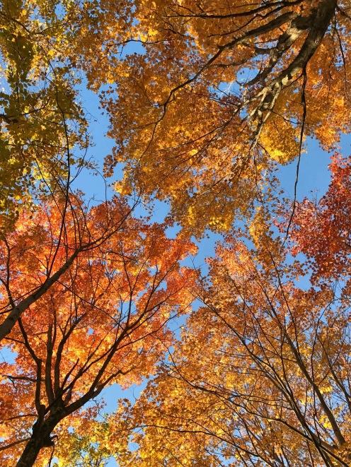Feuilles d'automne Mt Orford Delicieuse Vie