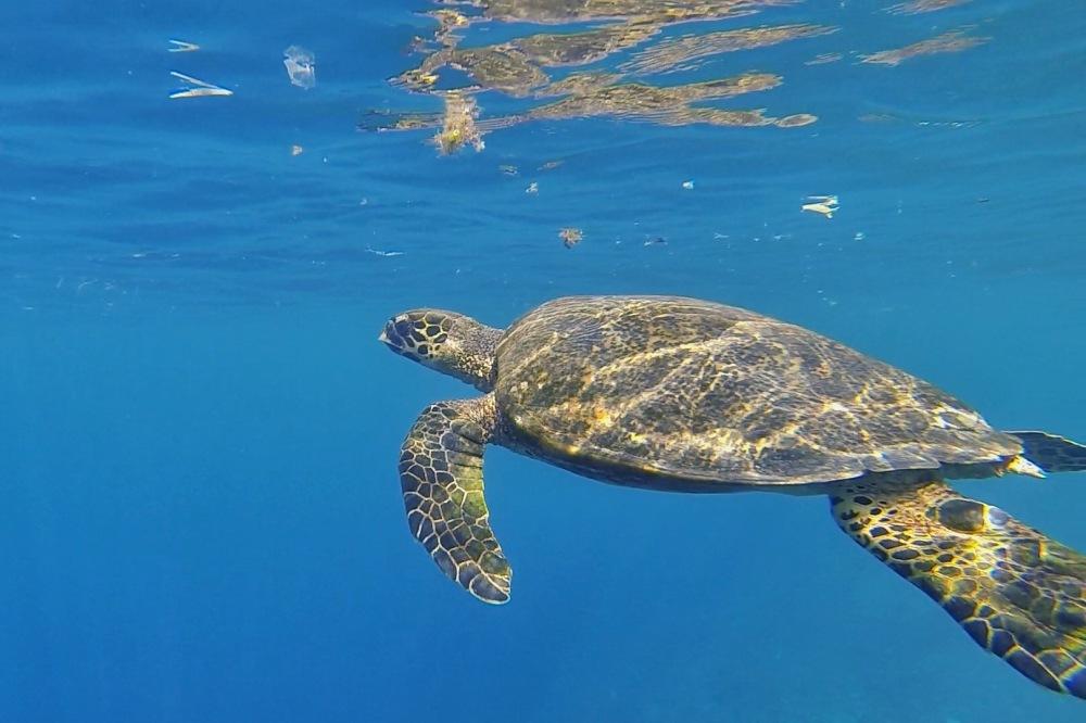 Tortue Gili Meno - snorkelling