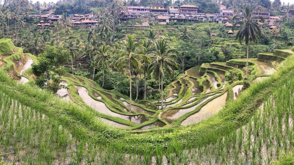 Terrasse de riz à Tegalalang, Ubud, Bali by Delicieuse Vie