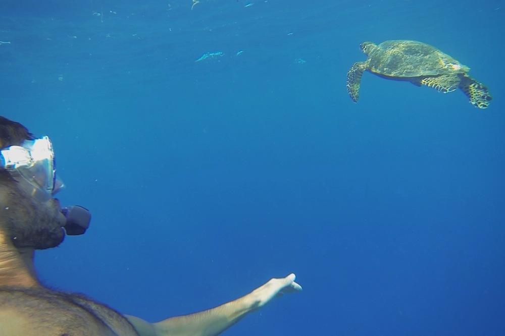 Tortue Gili Meno, Snorkelling
