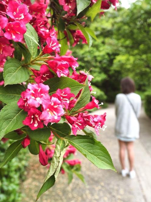 Central Park - Harlem blossom